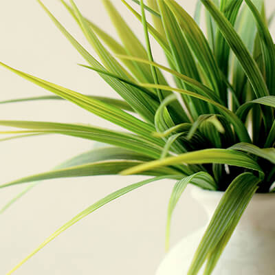 Give a green plant as a business gift